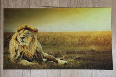 Diğer - Aslan Fotoğraflı Kapı Önü Dikdörtgen Paspas 70x39cm