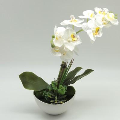 Diğer - Tabak Saksıda Orkide Beyaz