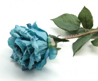 Diğer - Uzun Dal Gül Mavi