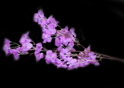 Diğer - Yapay Çiçek Akasya Demeti Mor 68cm